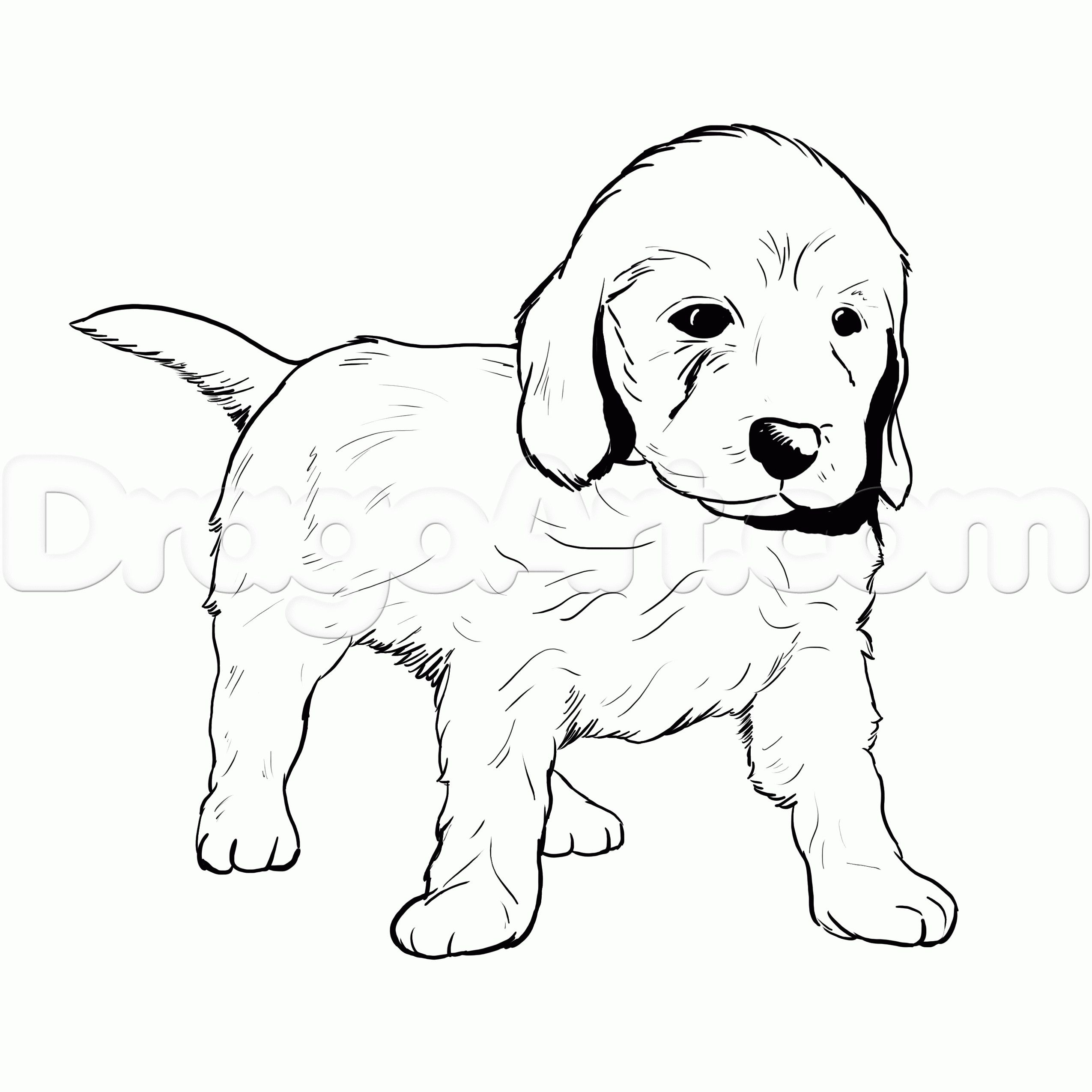 Golden Retriever Coloring Page Golden Retriever Coloring Pages New