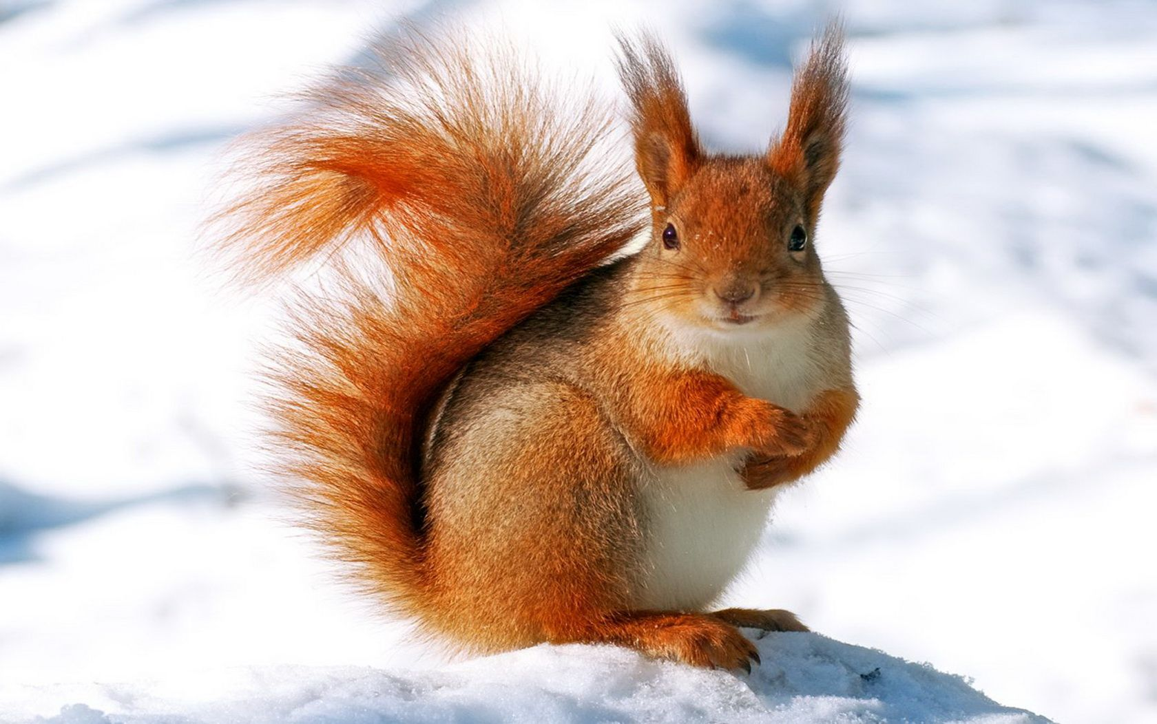Winter animal image animals wallpapers pinterest - Free funny animal screensavers ...
