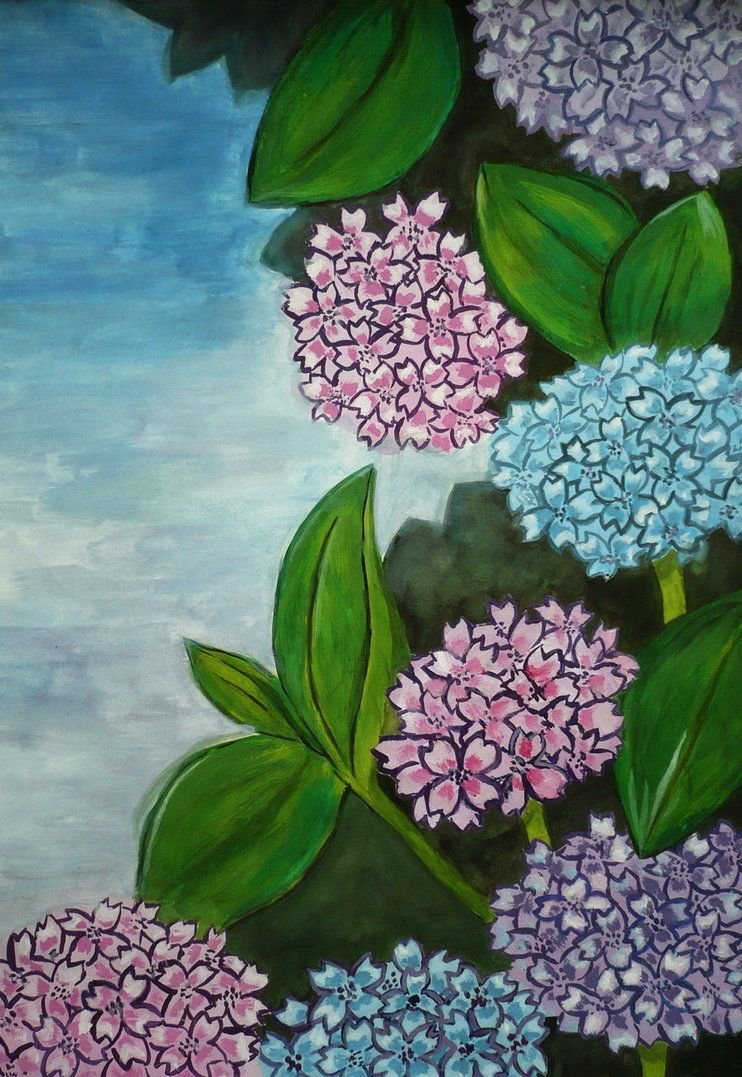 Hortenzia flowers
