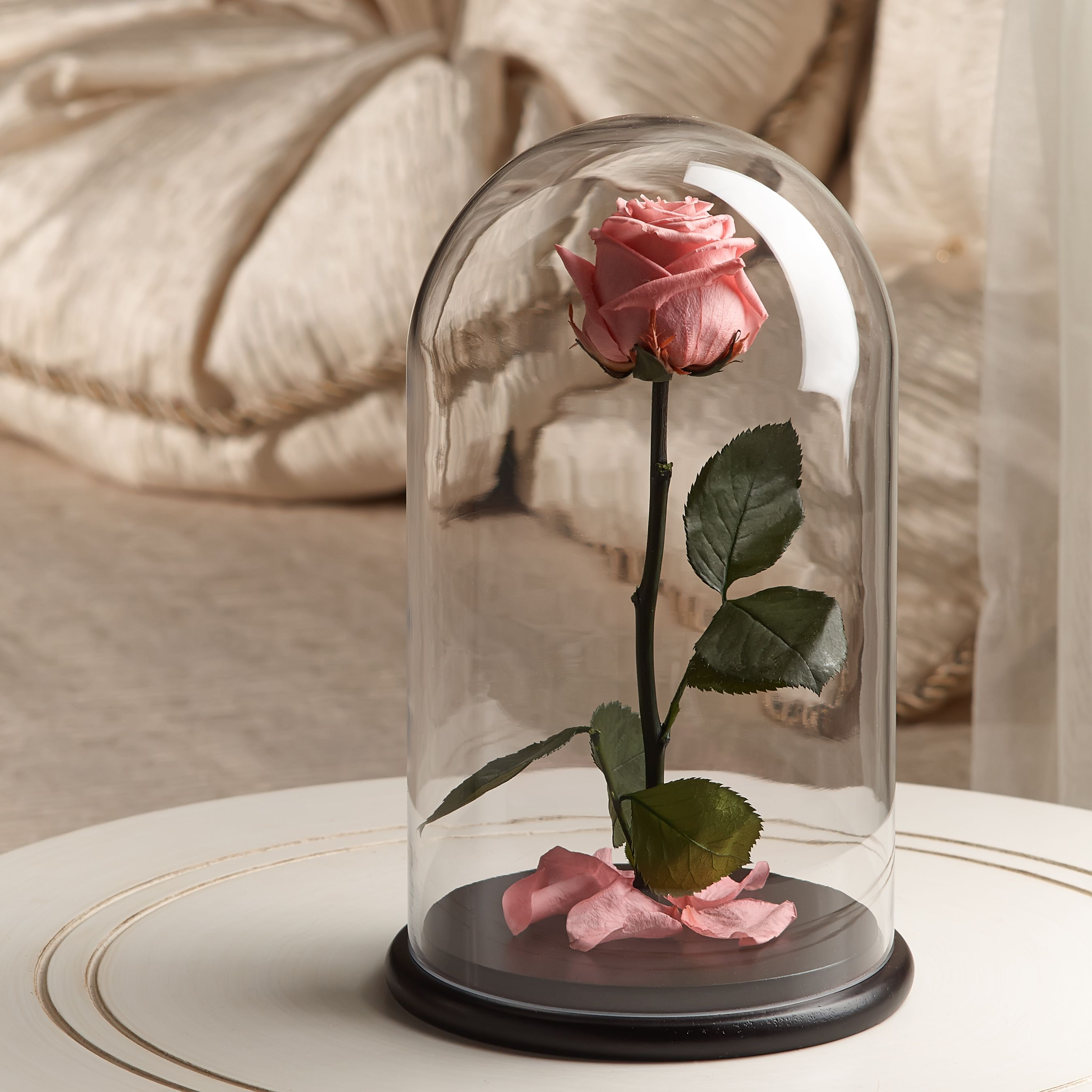 Beauty And The Beast Rose Baby Pink Gift Box Rose In Glass