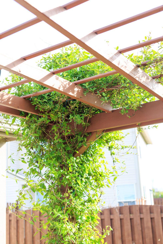 14 Best Climbing Plants For Pergolas Arches Arbor Or Trellis Trellis Plants Indoor Climbing Plants Climbing Plants Trellis