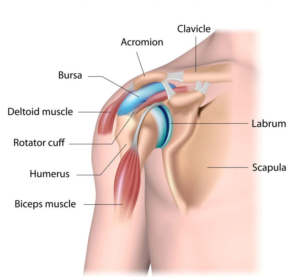 Diagram Of Shoulder Tendons Human Anatomy Drawing Rotator Cuff