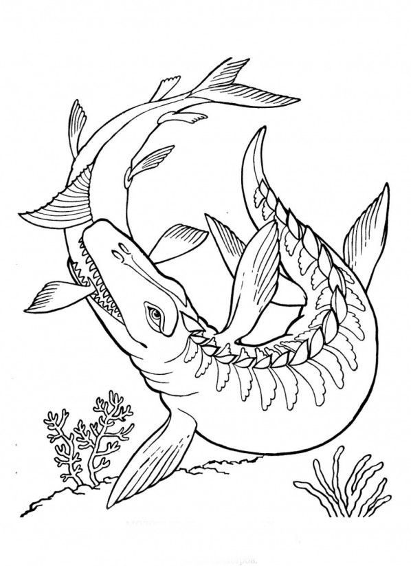 Printable Mosasaurus Dinosaur Coloring Pages Kidskat Rhpinterest: Underwater Dinosaurs Coloring Pages At Baymontmadison.com