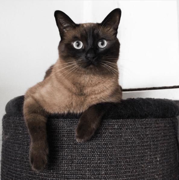 cool 20 of The World's Most Expensive Cat Breeds, Costing