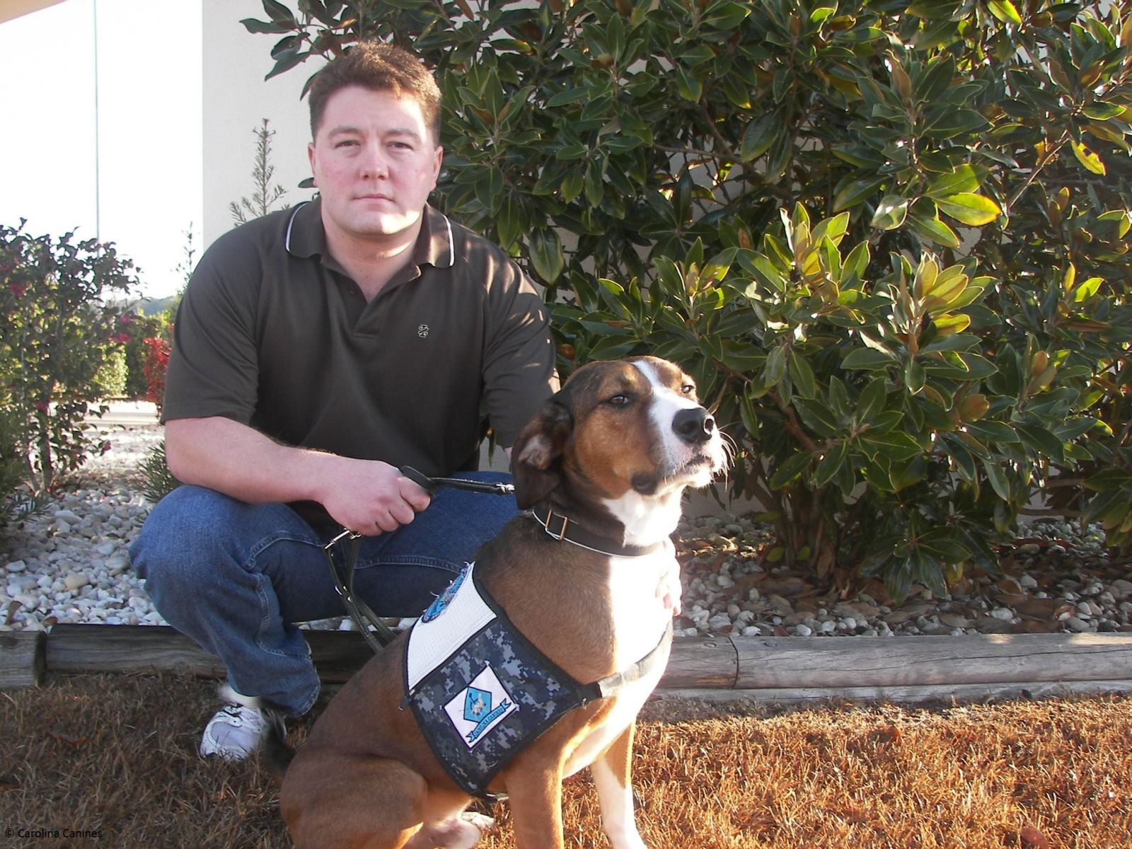 Canines For Veterans Is A National Program That Provides Veterans