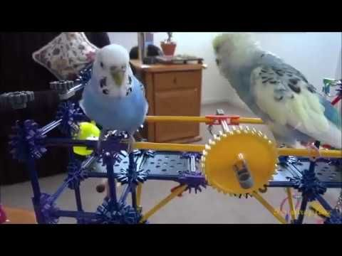 Mango & Blueberry's Afternoon Delight - YouTube