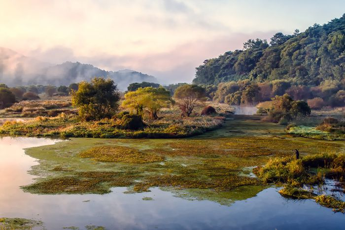 Changnyeong Upo Wetland | Places to visit, Places to go, Tourist  destinations