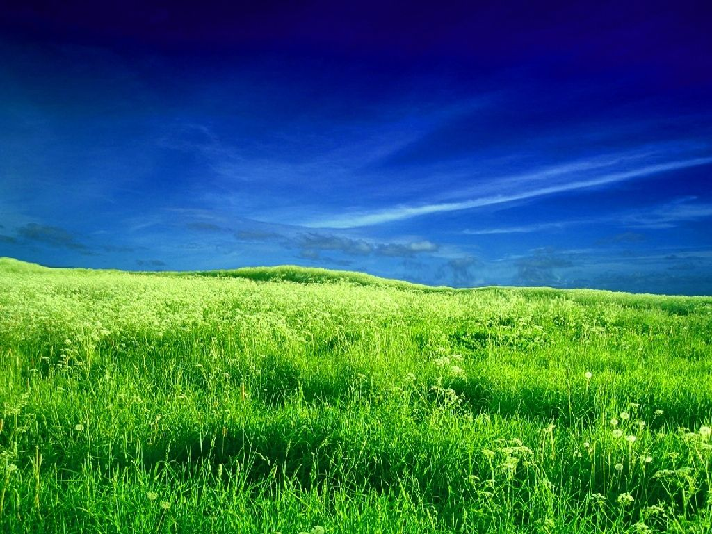 Field wallpapers 54475, Nature Photography Wallpapers