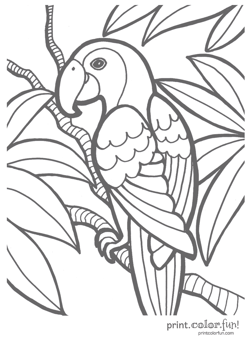 Parrot Print Color Fun Free Printables Coloring Pages Crafts Puzzles Cards To Print Jungle Coloring Pages Bird Coloring Pages Easy Coloring Pages