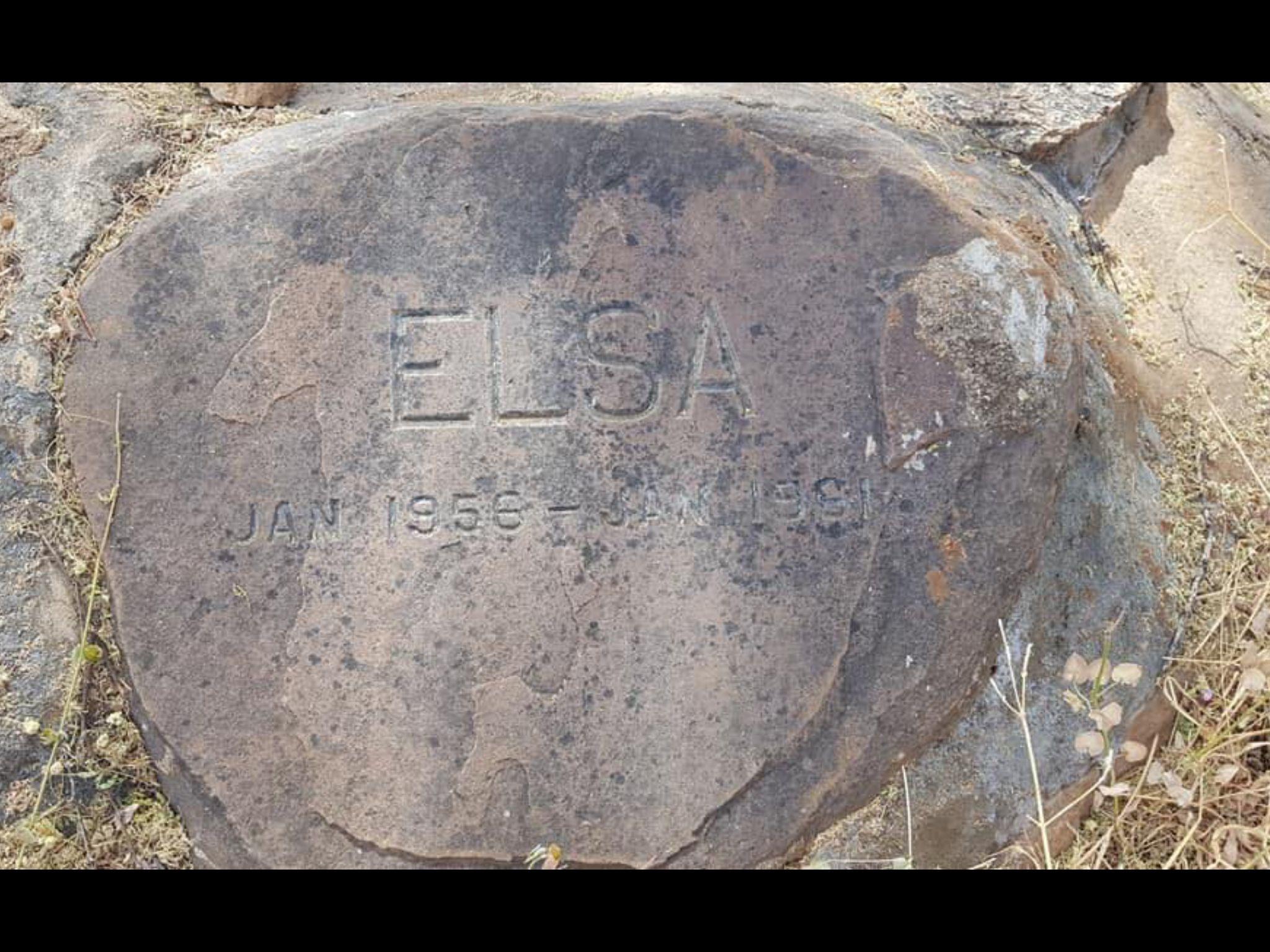 Elsa Grave