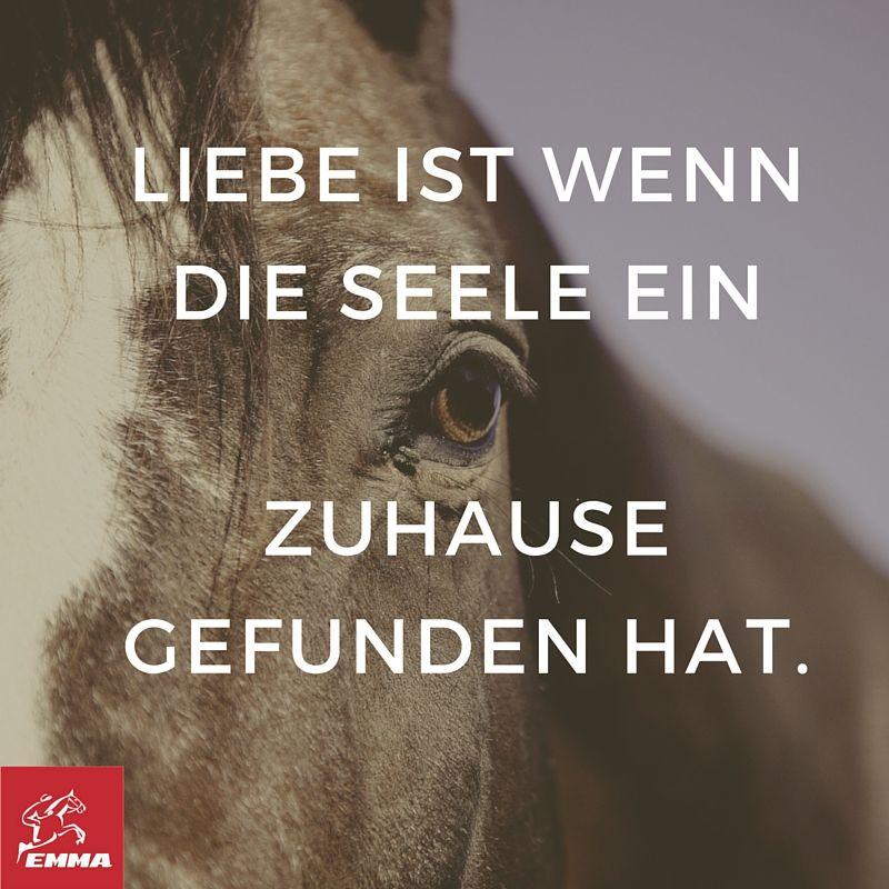 Pferdesprüche Pferd Hustet Emma Pferdefuttershopde232