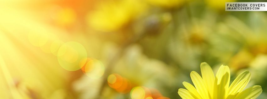Burst of Spring Facebook Covers - Facebook Covers | Timeline ...