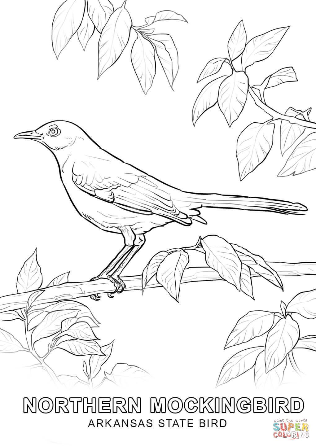 Arkansas State Bird Coloring Page Free Printable Coloring Pages