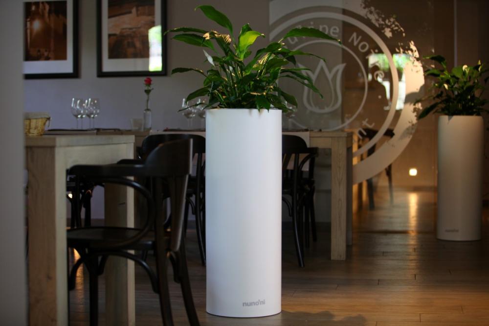 Domowe Sposoby Na Zdrowe Rosliny W Donicach Inspirowani Natura Flower Pots Modern Design Modern