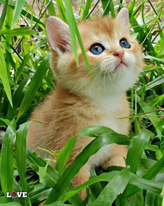 My Website Is Secure Safe 1st We Fix The Cat Litter Boxes Then Cat Trees Doors Bowls Mats Scatter More If You Don T K Baby Cats Kittens Cutest Cute Cats
