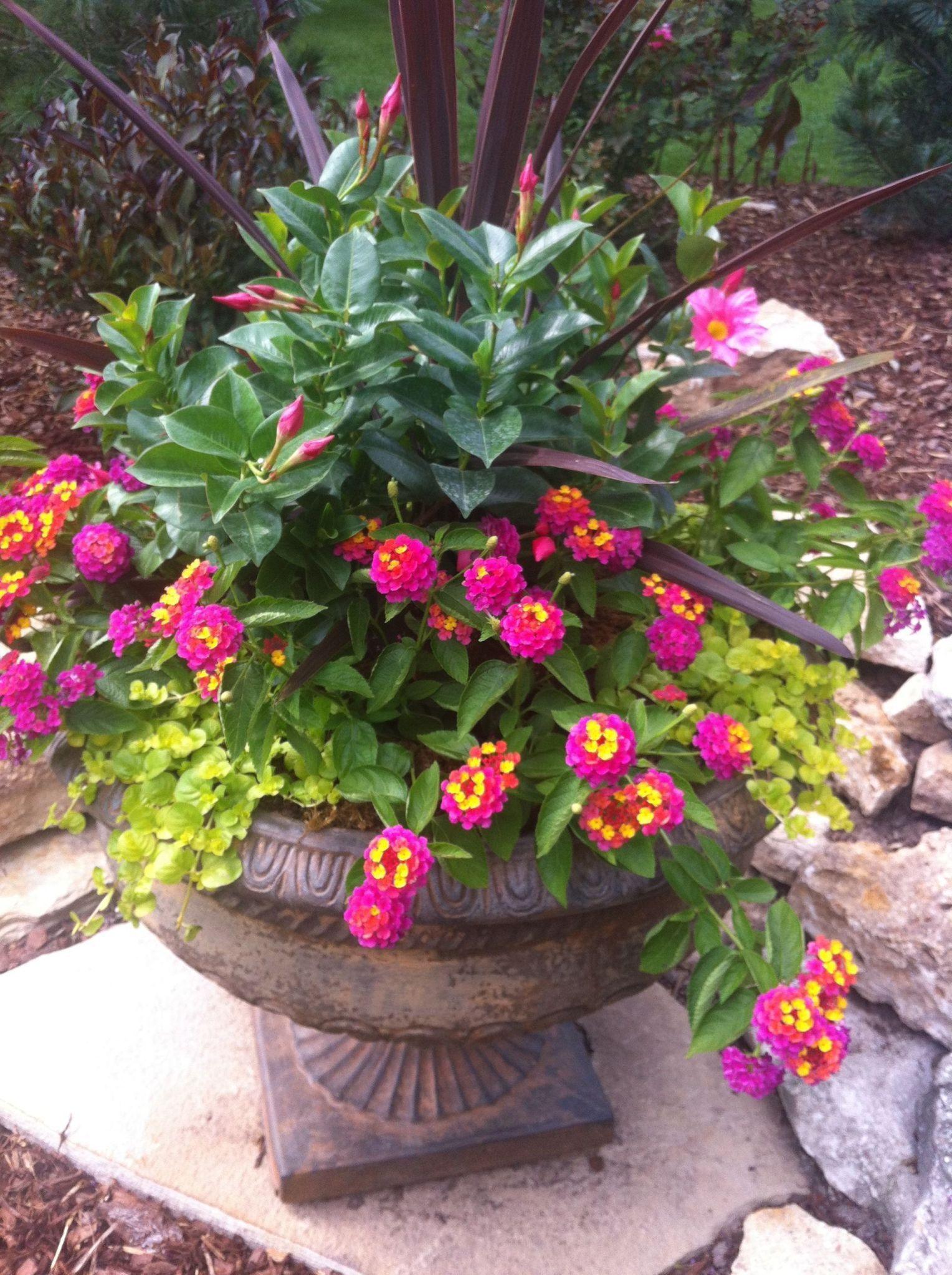 Container Flower Garden - Most Beautiful Gardening Flowers ...