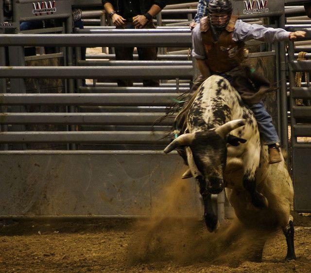Professional Bull Riding (PBR), Indianapolis 2008