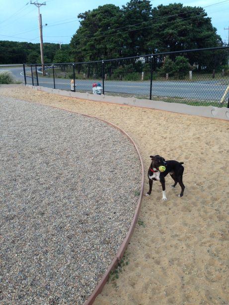 P Town Fancy Dog Dog Friends Provincetown
