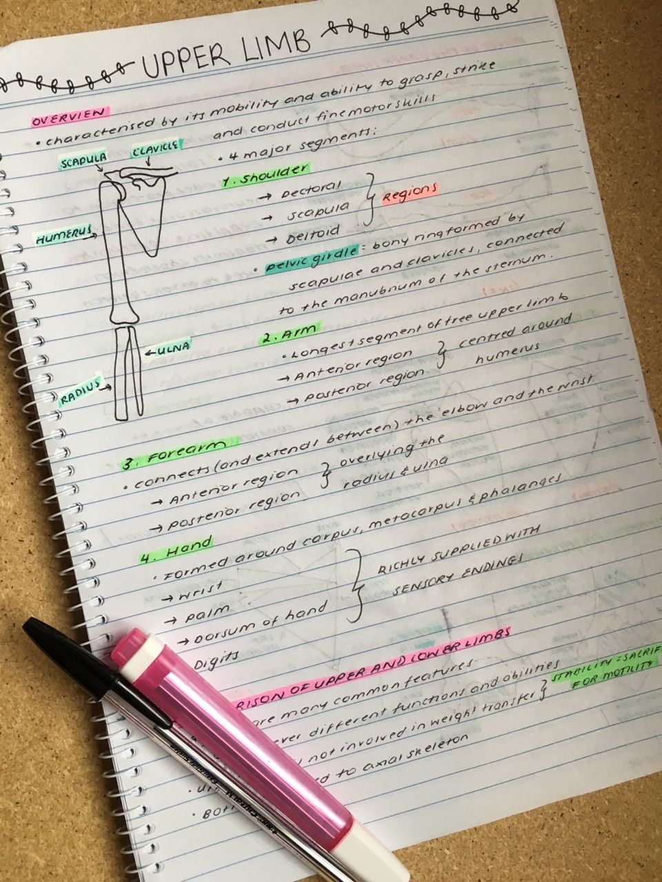 maddie\'s studyblr — || Simple physics and upper limb anatomy notes ...