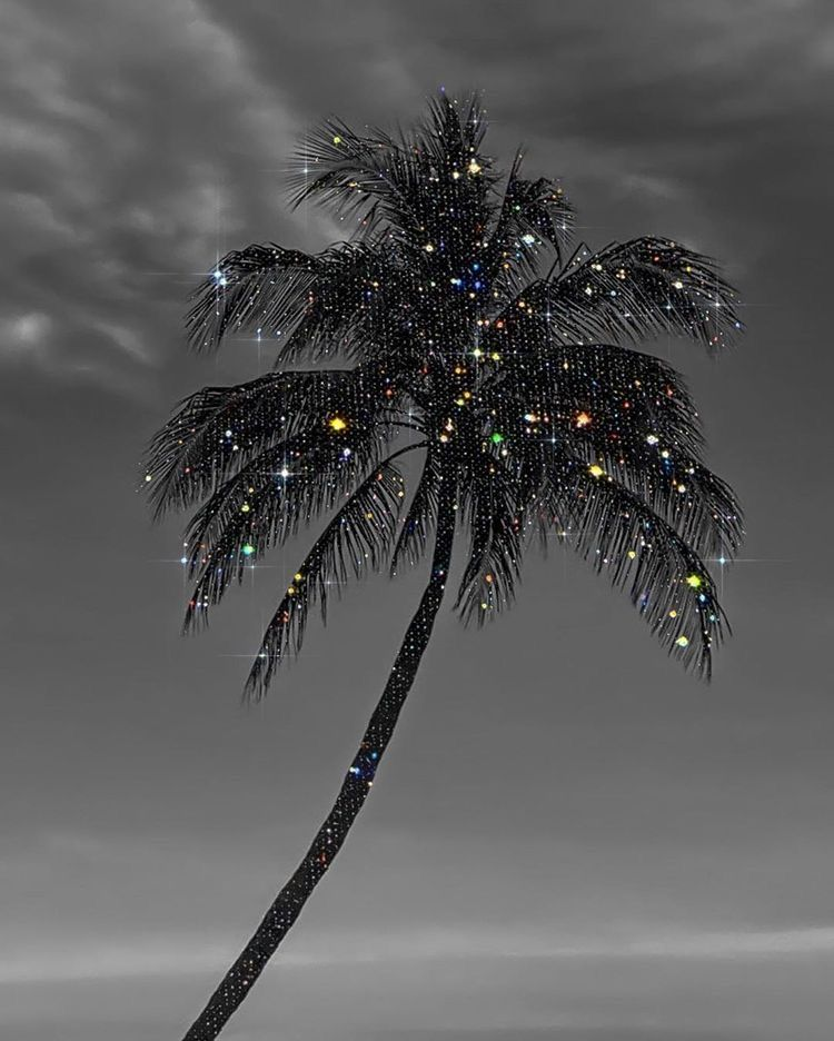 Palm Tree Black And White Picture Wall Black Aesthetic Wallpaper Black And White Photo Wall