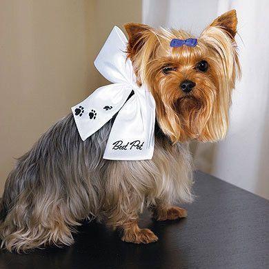 Wonderful Terrier Bow Adorable Dog - 4de1b167cbce509981d3cd4d7d4fadae  Graphic_496248  .jpg