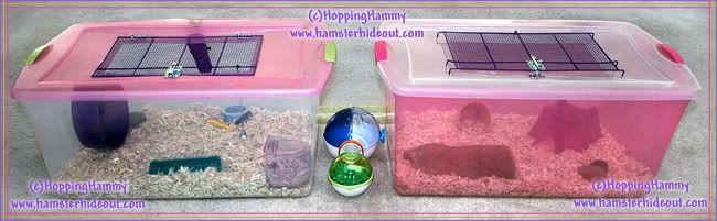 Bin Cage Hamster Bin Cage Hamster Diy Syrian Hamster