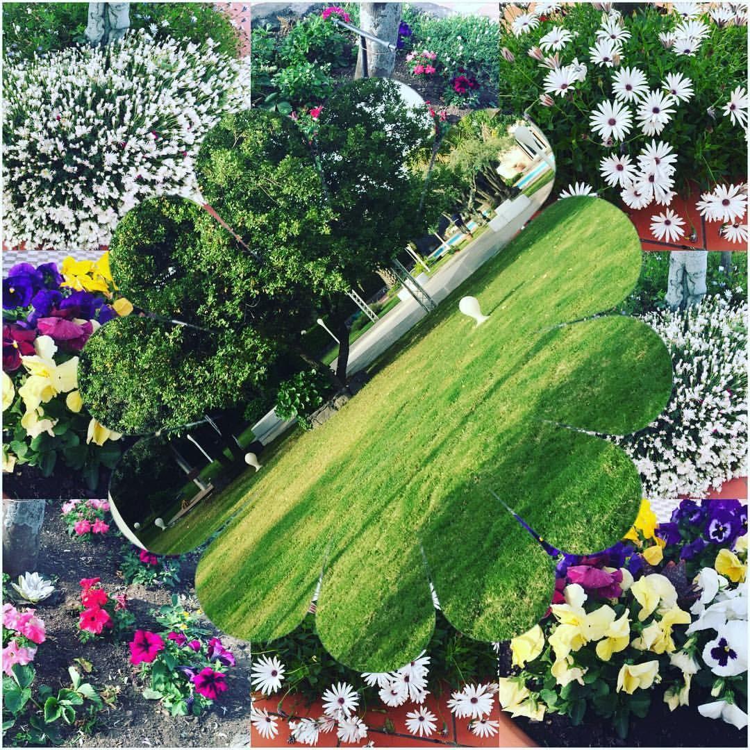 Fabrizio Licciardello — #flowerpower #greenpower #nature #naturelovers...