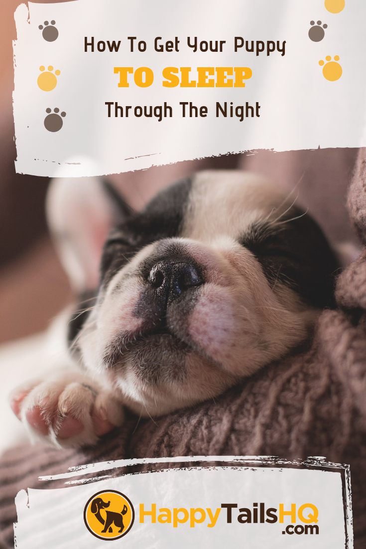 How To Get Your Puppy To Sleep Through The Night Dogs Photography