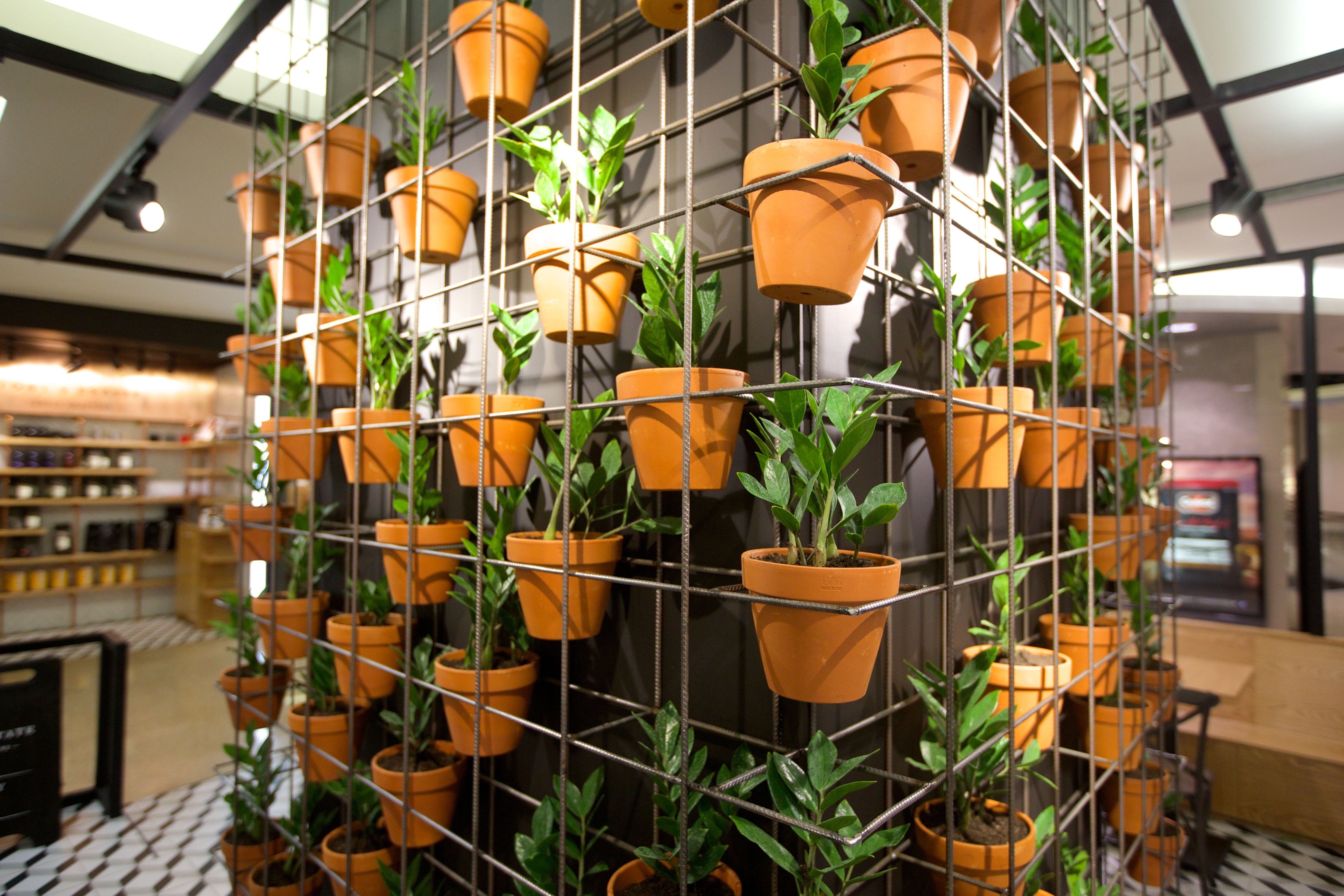 Wall plant feature. They are alive! Designed by Guru Projects