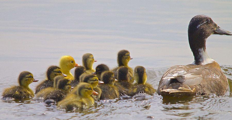 Gepind vanaf vroegevogels.vara.nl