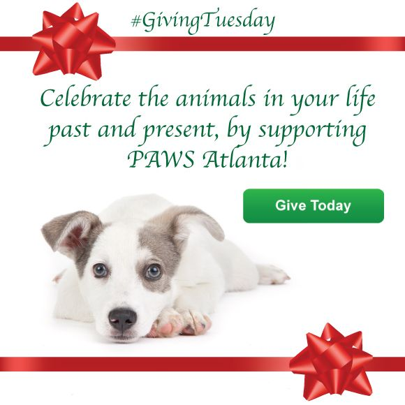 It S Givingtuesday Support Paws Atlanta Today At Https Pawsatlanta Ejoinme Org Donate Supportive Paw Giving Tuesday