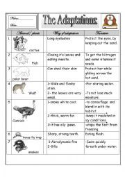 english worksheet some animal s adaptations worksheets science animal adaptations. Black Bedroom Furniture Sets. Home Design Ideas