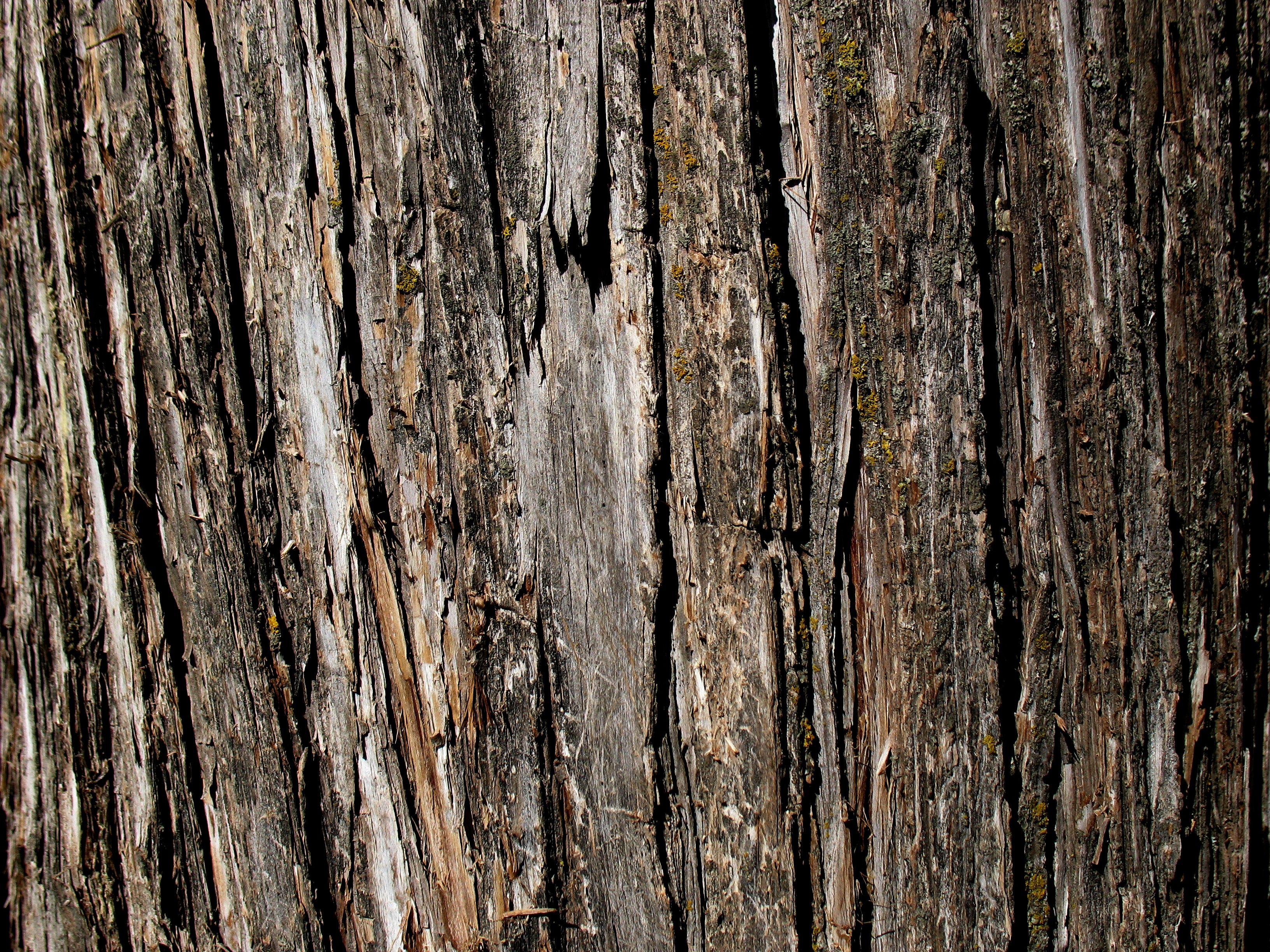 Tree Bark Google Search Casca De Madeira De Madeira Botanica