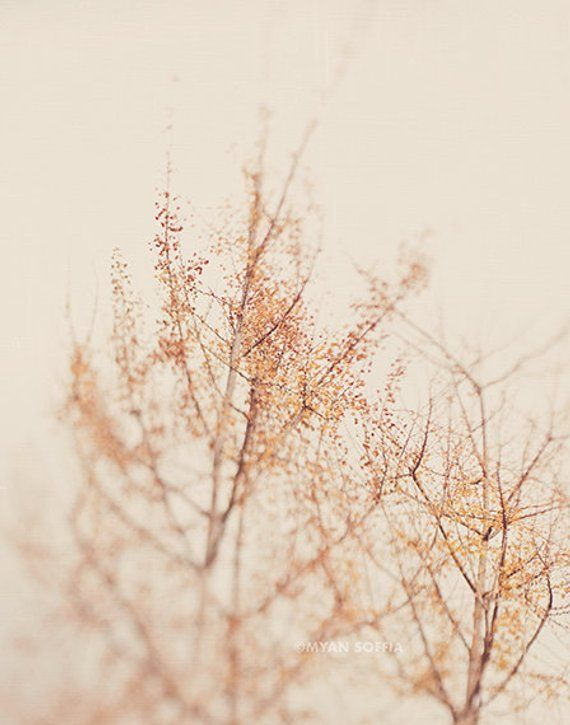 Ginkgo Tree Photo Nature Print Botanical Photograph