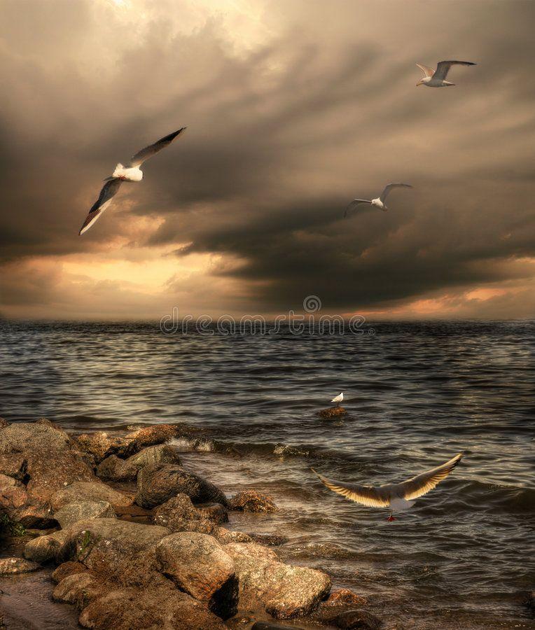 Seagulls Sea Landscape With Dramatic Sky And Seagulls Sponsored Landscape Sea Seagulls Seagulls Sky Ad Photo Sea Storm Seagull
