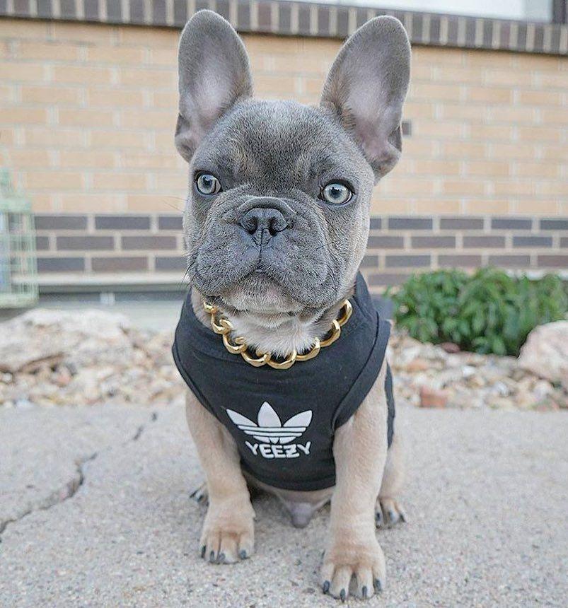 French Bulldog World Frenchbulldogwd Instagram Posts Videos