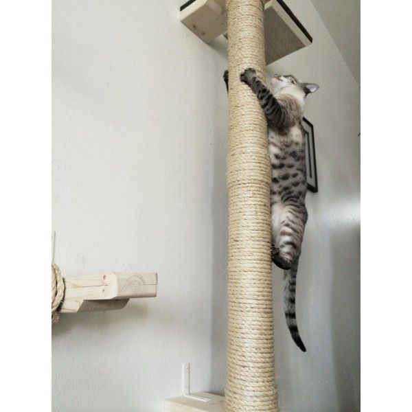 Image result for cat climbing pole | Cool Cat Furniture ...