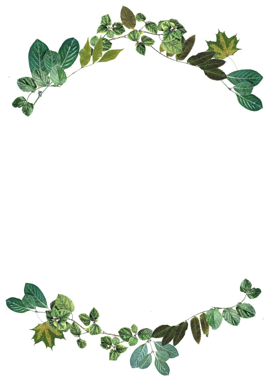 free image on pixabay leaves border nature frame frame border design floral border design photo frame design leaves border nature frame