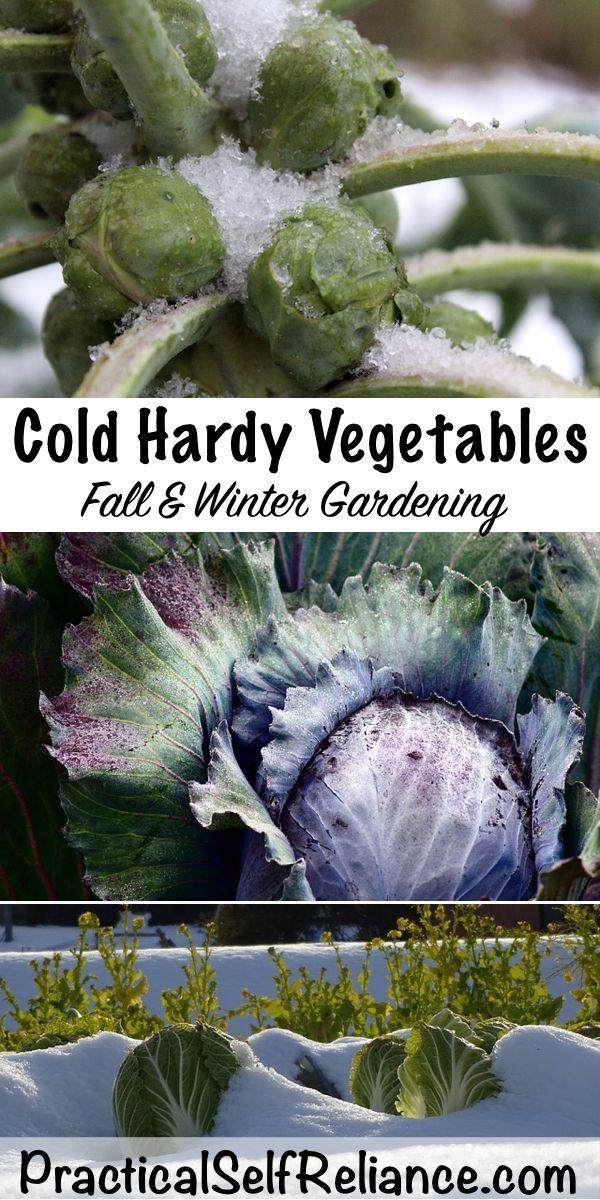 Kaltes winterhartes Gemüse für den Herbst und Wintergartendesignideas