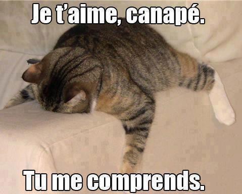 Image Chat Avec Texte Drôle Pour Facebook Avec Chat Drôle