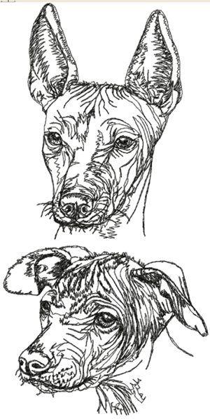 Mexican Hairless Dog Xoloitzcuintle Set Xolo Perro