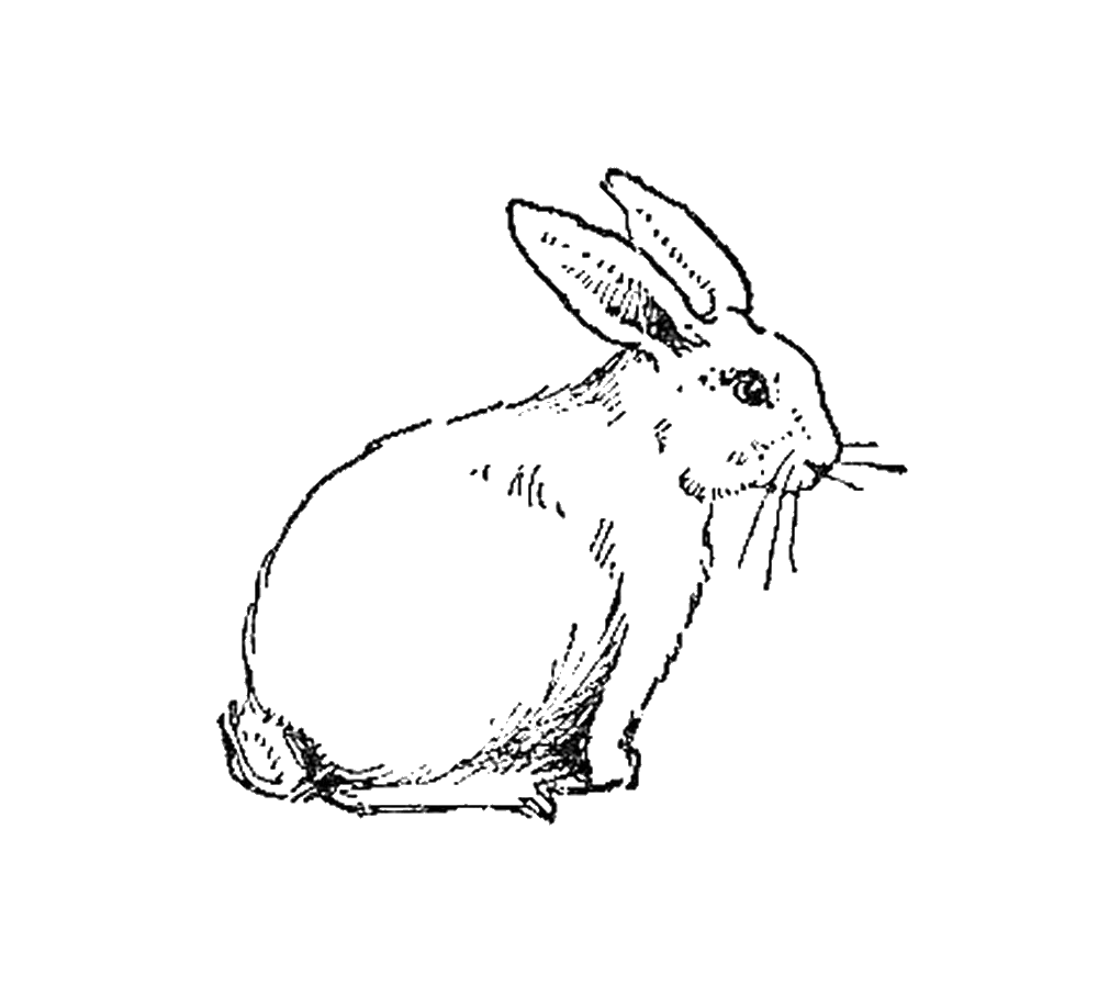 Free Rabbit Digital Stamps for Card Making   Free Animal Digital Stamp: Rabbit Digital Stamp