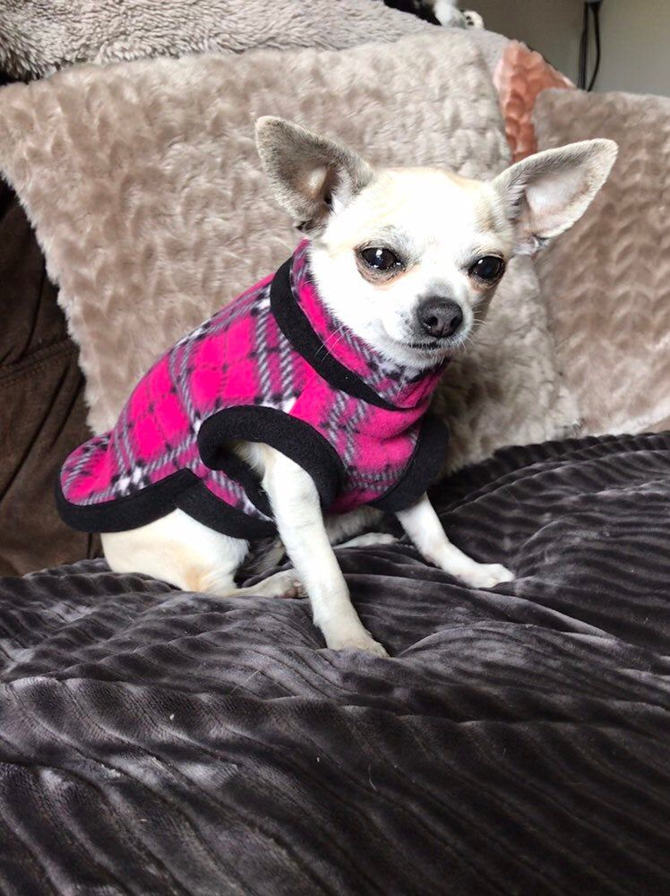 chihuahua fleece housecoat