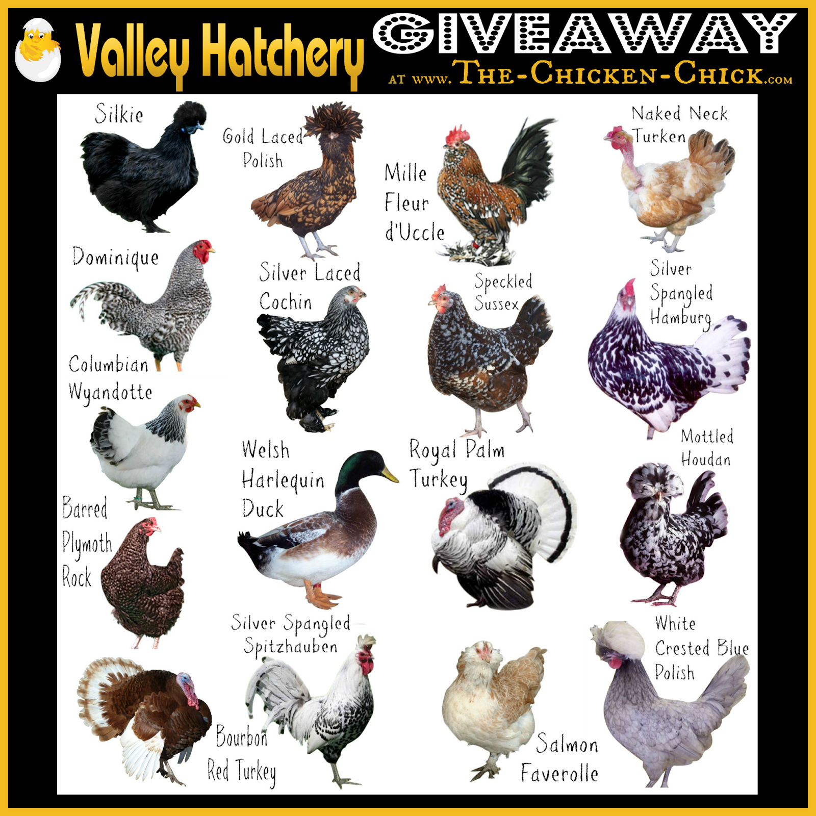 clever blog hop 127 chicken coops and raising