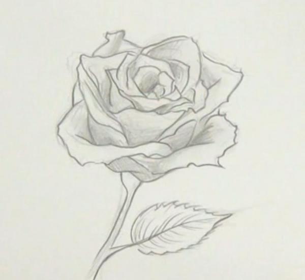 Cmo dibujar una rosa Las rosas son unas flores muy bonitas y