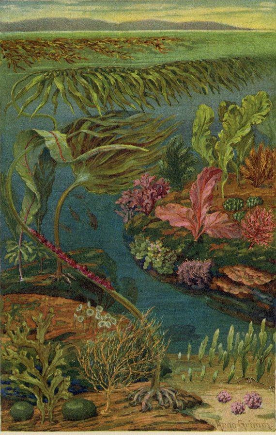 Antique Marine Life Print C 1892 Original German Chromolithograph Sea Ocean Floor Fish Water Reef