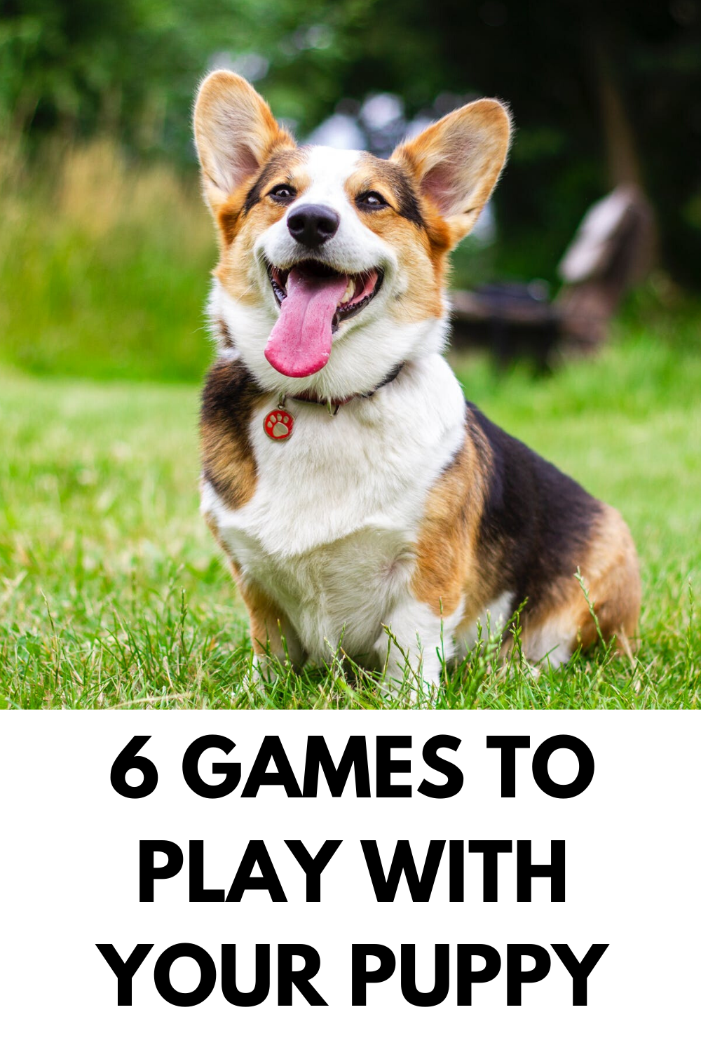 6 Games to Play With Your Puppy in 2020 Happy dogs