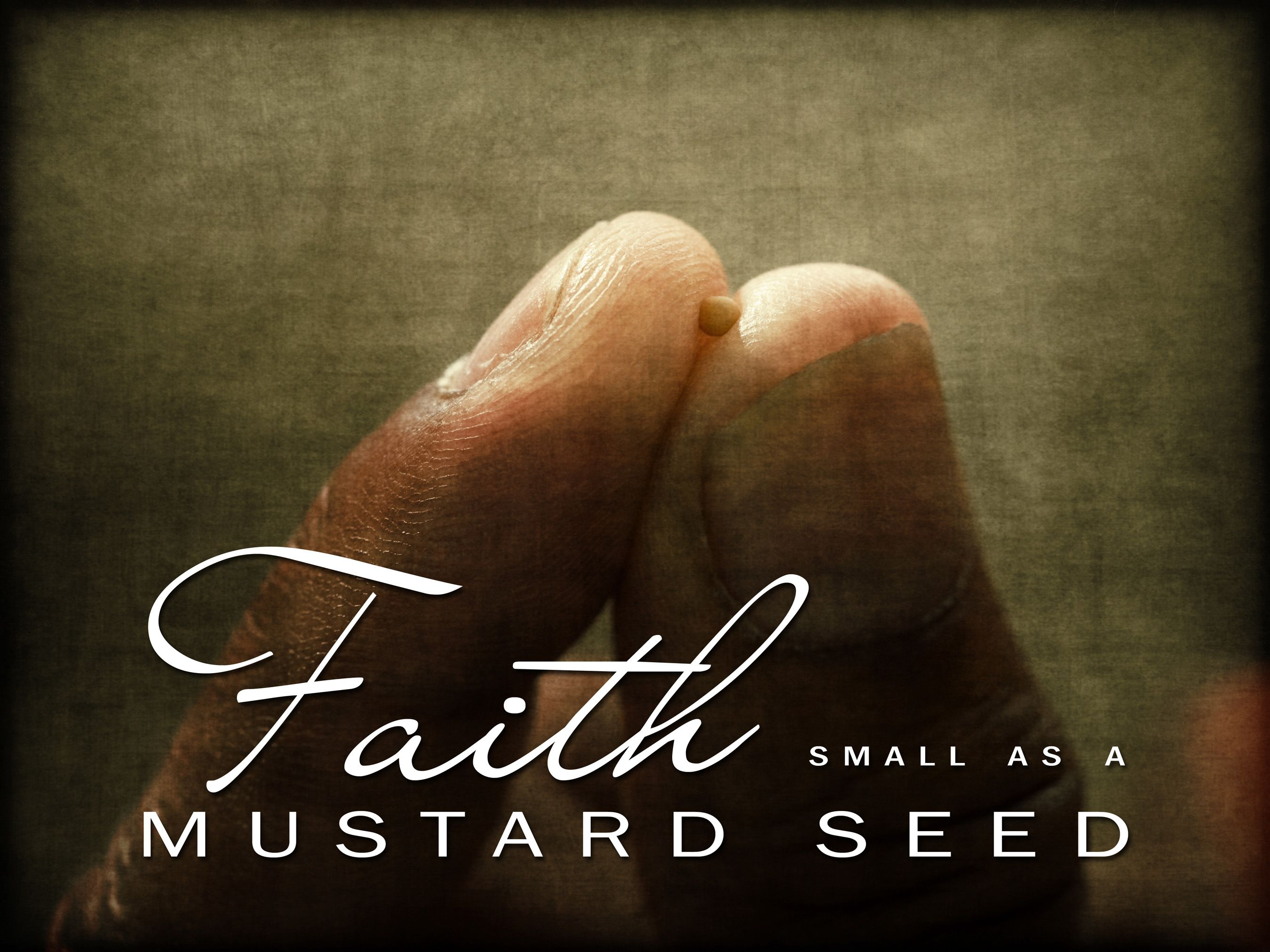 Image result for mustard seed faith