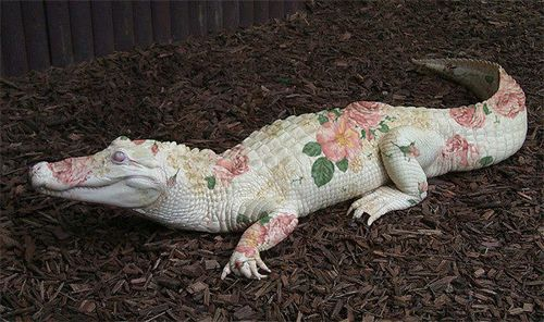 oldmanstephanie:  follow for more soft alligator  this is okay.