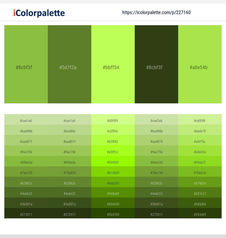 Sushi Crete Green Yellow Seaweed Conifer Color Scheme Icolorpalette Green Palette Green Colour Palette Color Palette Yellow